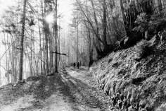 Winterspaziergang mit Sonne
