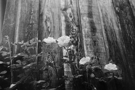 ORWO TC27 Rosen vor Holzwand