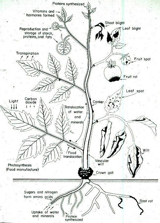 House Plant Disease