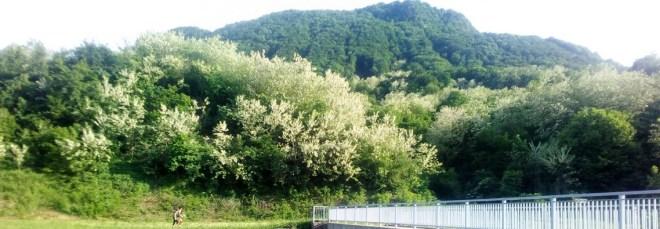 Proljeće na Čevu