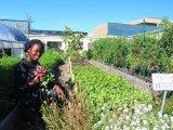 student urban farming