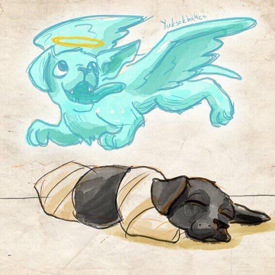 2 köpek yavrusunu ezmemek için koca ordunun yönünü değiştiren, 7 uyuyanların köpeği kıtmir için cenneti müjdeleyen, kuşu ölmüş bir çocuğa taziye ziyaretine giden ve cübbesinde uyuyan kediyi uyandırmamak için cübbesini keserek ayağa kalkan bir peygamberin ümmetinden ramazan bayramında böyle üzücü bir olaya biz nasıl dönüştük? Yani gerçekten insan ne diyeceğini şaşırıyor…