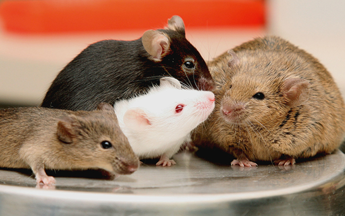 Hantavirus: How to reduce risk and exposure | Charlotte Observer