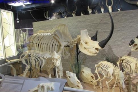 Skeletons: Museum of Osteology + ICON Orlando