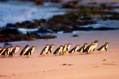 BPEN - Bunyip Tours - Phillip Island Ultimate Eco Day Tour