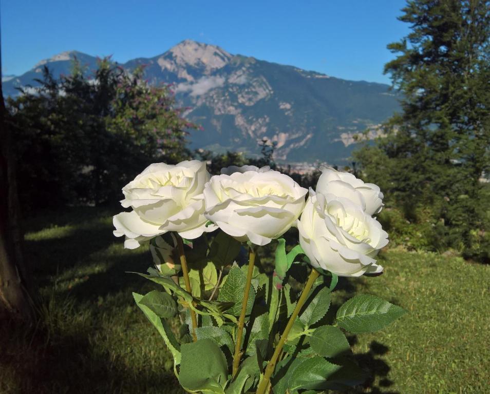 B B White Rose Trento Italy Booking Com