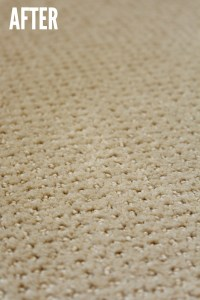 how to remove pet stain from carpet  Floor Matttroy