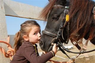 Terapia cavalo