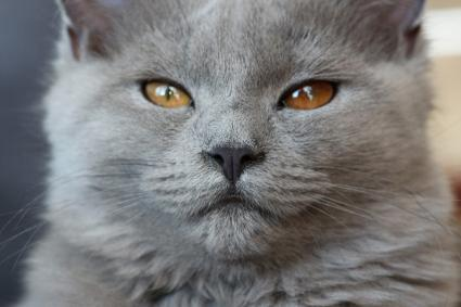 why do cats eyes