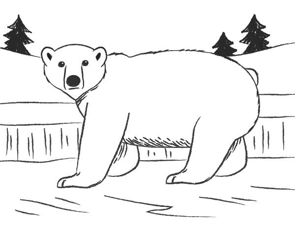How To Draw A Polar Bear Lovetoknow