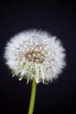 How Do Weeds Spread  LoveToKnow