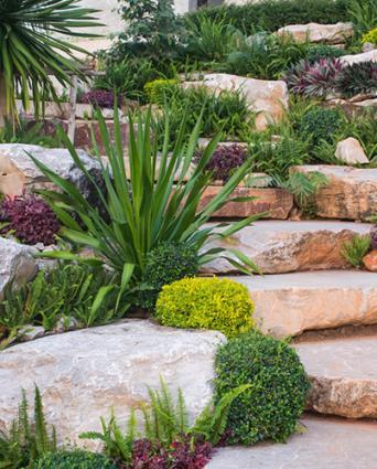 plants in rock gardens