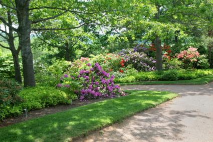 landscape ideas reduce grass