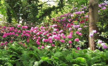 rhododendron lovetoknow