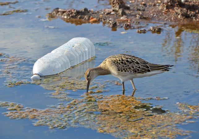 Botellas de plástico contaminando lugares naturales