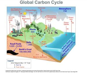 Carbon Cycle Diagram | LoveToKnow