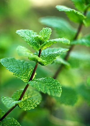 List of Bitter Herbs  LoveToKnow