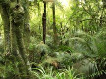Medicinal Herbs of New Zealand | LoveToKnow