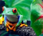 Animals In Tbe Rainforest