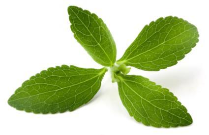 Dangers of Stevia  LoveToKnow