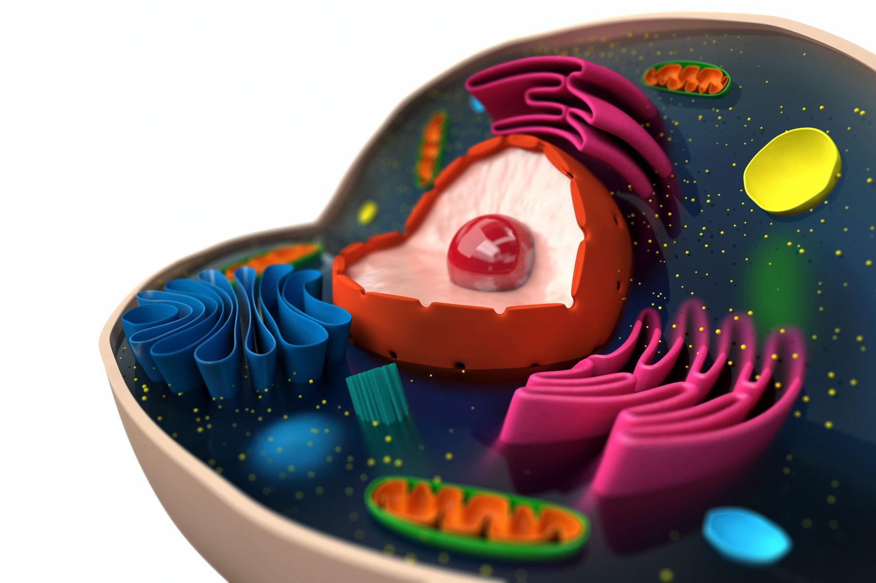 3d animal cell coloring diagram tempstar wiring heat pump basics of biology lovetoknow