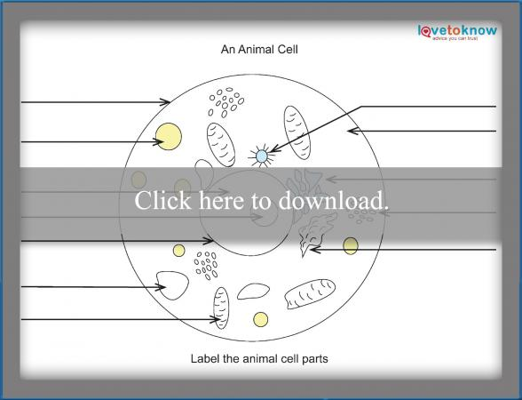 animal cell blank diagram to fill in pa sound system wiring basics of biology lovetoknow the worksheet