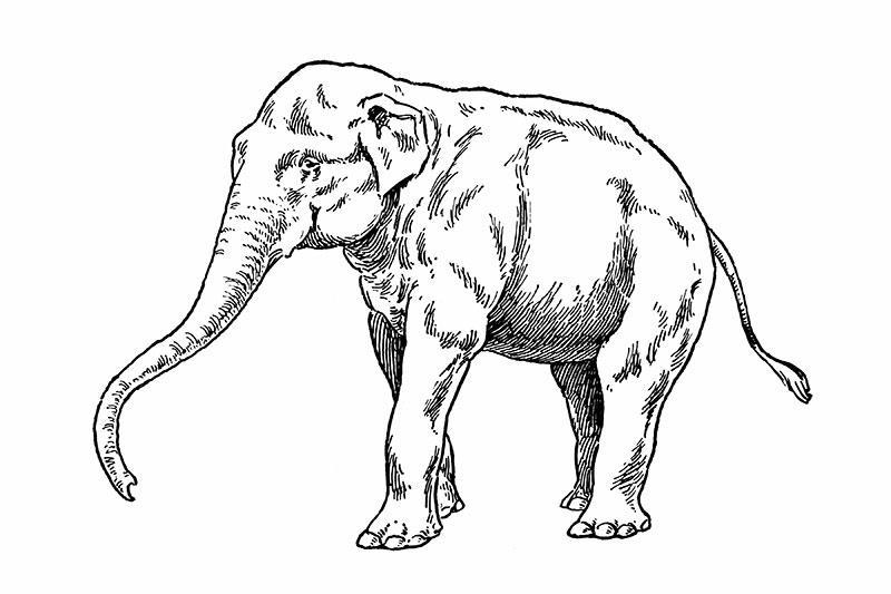 Elephant Tattoo Designs [Slideshow]