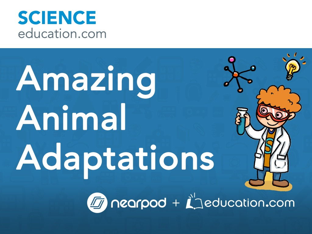 Amazing Animal Adaptations [ 768 x 1024 Pixel ]
