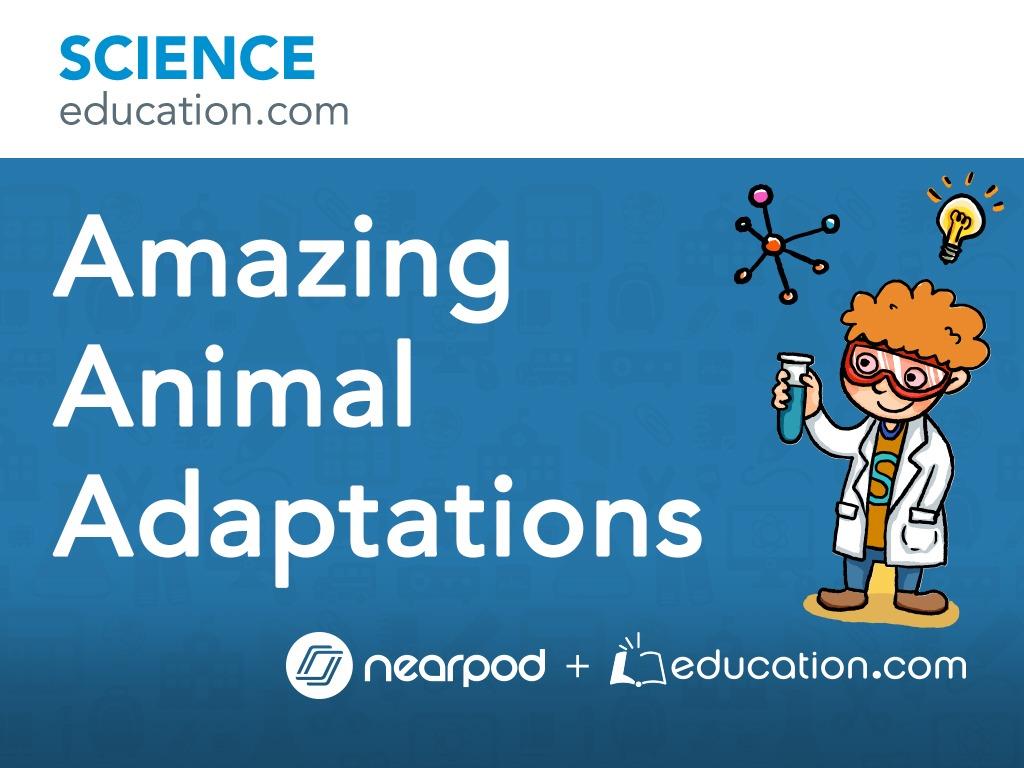 small resolution of Amazing Animal Adaptations