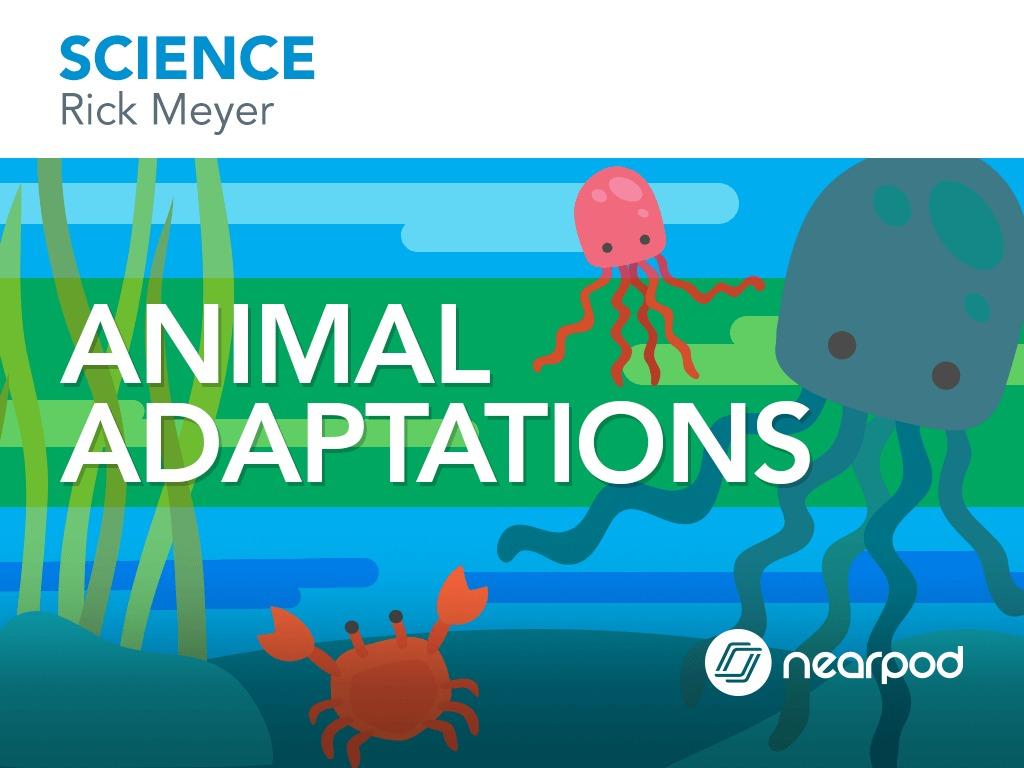 medium resolution of Animal Adaptations