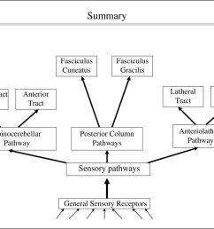 pathway posterior column pathways sensory pathways general sensory receptors anterior tract anteriolatheral pathways [ 1024 x 768 Pixel ]