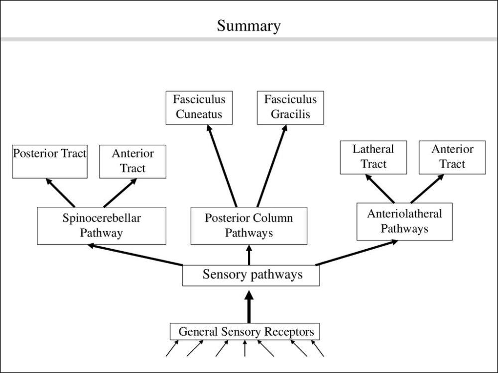 medium resolution of pathway posterior column pathways sensory pathways general sensory receptors anterior tract anteriolatheral pathways