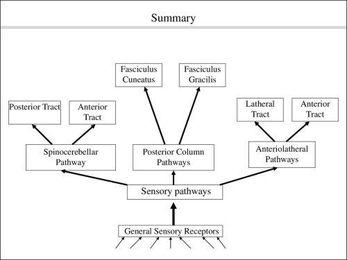 small resolution of pathway posterior column pathways sensory pathways general sensory receptors anterior tract anteriolatheral pathways