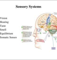 sensory systems [ 1024 x 768 Pixel ]