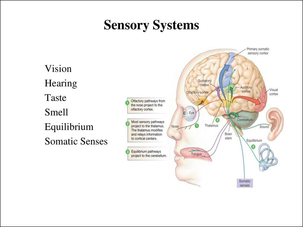 hight resolution of sensory systems