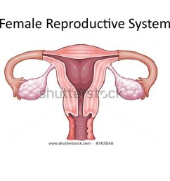 female reproductive system [ 1024 x 768 Pixel ]