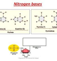 nitrogen bases [ 1024 x 768 Pixel ]
