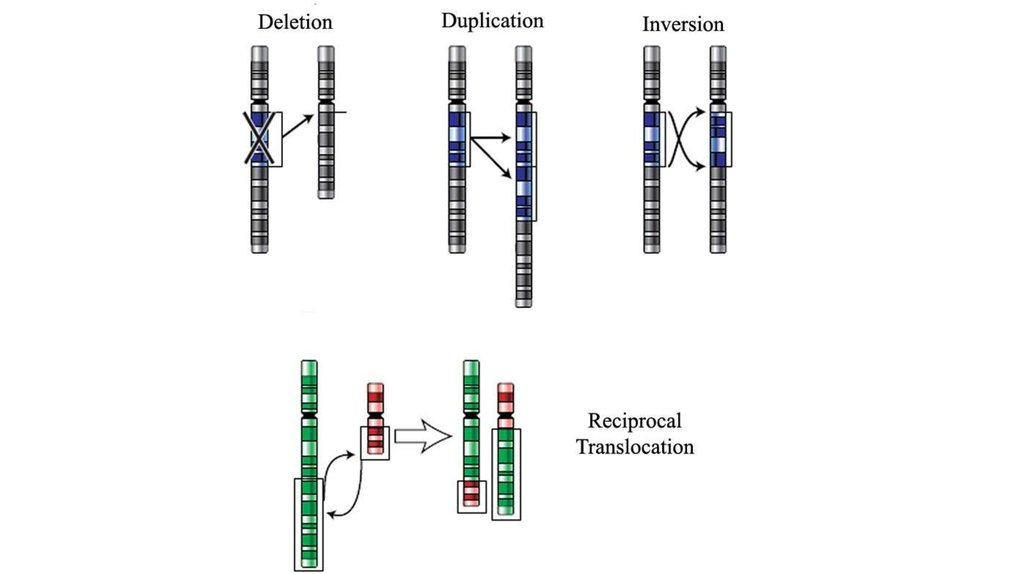 The mechanism of chromosome, gene mutation. The theory of