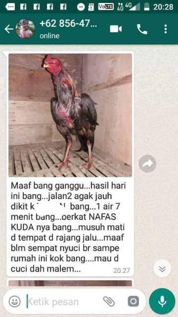 Jamu Ayam Aduan Kuat Nafas : aduan, nafas, DOPING, HERBAL, NAFAS, TETES, AMPUH, Shopee, Indonesia