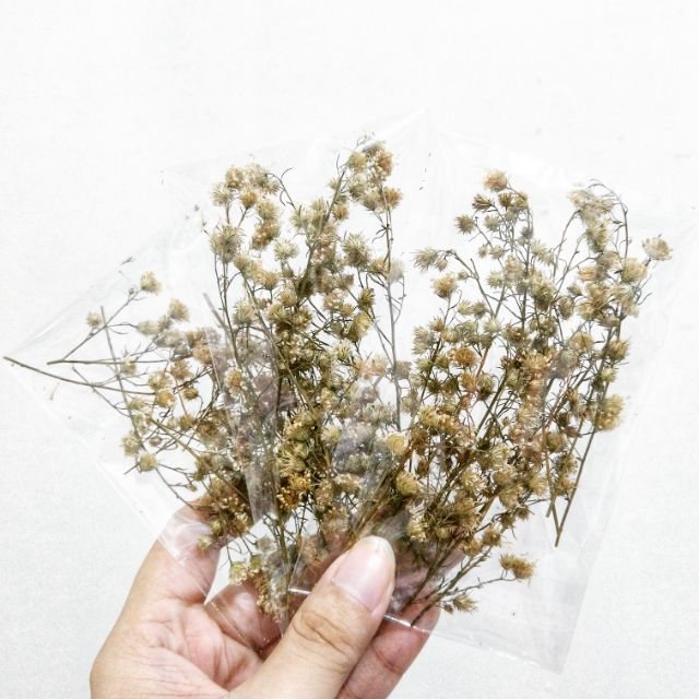 Dried White Tiny Flowers For Bullet Journal Recycled Paper Decoration Aesthetic Craft Art Small Pack Shopee Philippines