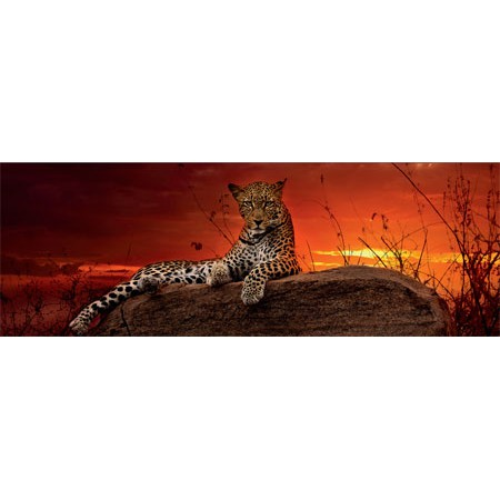 德國原裝進口 HEYE 2000片拼圖紅色黎明花豹29608 | 蝦皮購物
