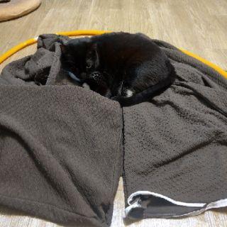【自售】加厚防貓抓-雙人沙發套 送貓咪專用壓條 | 蝦皮購物