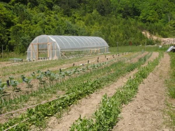 HF Farm Field