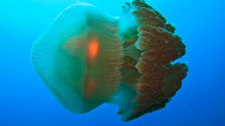 Scientists Find A Cure For The Deadly Box Jellyfish Sting