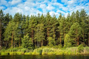 Deciduous trees can compensate for carbon emissions from forest fires • Earth.com