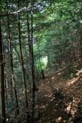 Richland Balsam Mountain trail