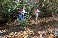 Crossing Woodland Creek