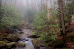 Middle Saluda River Mist