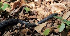 The obligitory snake