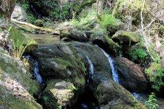 On Tamassee Creek